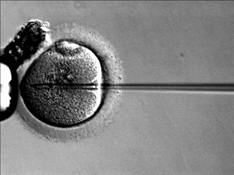 Bei der In-Vitro-Fertilisation wird das Spermium mit einer Pipette (rechts) in Eizelle (links) eingebracht. (Bild: Wikicommons)